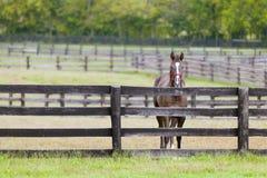Pferd auf einem Bauernhof Lizenzfreie Stockbilder
