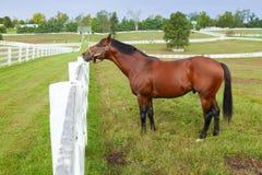Pferd auf einem Bauernhof Stockfoto