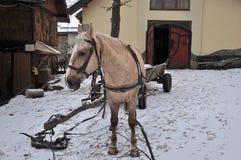Pferd auf einem Bauernhof Lizenzfreies Stockfoto