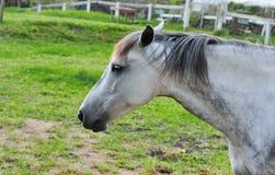 Pferd auf einem Bauernhof, Abschluss oben Lizenzfreie Stockbilder