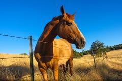 Pferd auf einem Bauernhofgebiet lizenzfreie stockbilder