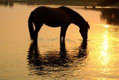 Pferd auf einem Bewässerungsplatz Stockfotos