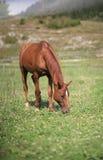 Pferd auf einem Feld Lizenzfreie Stockfotografie
