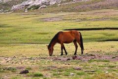 Pferd auf einem Gebiet Stockfotografie