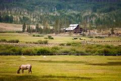 Pferd auf einem Gebiet auf einer Ranch stockfoto