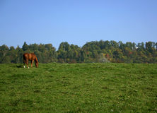 Pferd auf einem Hügel Stockfotografie