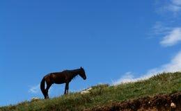 Pferd auf einem Hügel Lizenzfreie Stockfotos