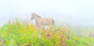 Pferd auf einem nebelhaften Gebiet im Herbst Stockfotografie