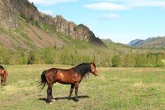 Pferd auf einer Lichtung Lizenzfreie Stockbilder