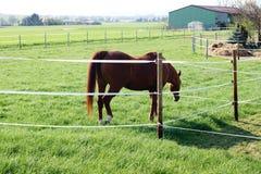 Pferd auf einer Weide Lizenzfreie Stockfotografie