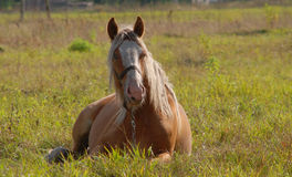 Pferd auf einer Wiese Stockfoto