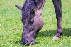 Pferd auf einer Wiese Lizenzfreie Stockbilder