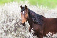 Pferd auf Fr?hlingsblumen lizenzfreies stockfoto