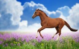 Pferd auf grünem Feld Stockfotografie