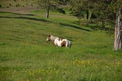 Pferd auf grünem Feld Stockfotos