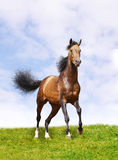Pferd auf Gras Stockbild