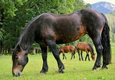 Pferd auf Gras stockfotos