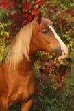 Pferd auf Herbsthintergrund Lizenzfreie Stockfotos