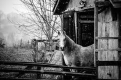 Pferd auf kaltem Morgen Stockbild