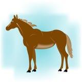 Pferd auf Kurveblauhintergrund Lizenzfreies Stockfoto