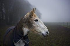 Pferd auf Misty Day Lizenzfreie Stockbilder