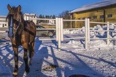 Pferd auf Momarken Lizenzfreie Stockfotos