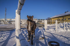 Pferd auf Momarken Stockbilder