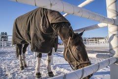 Pferd auf Momarken Stockfotos