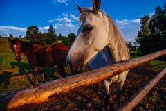 Pferd auf Ranch lizenzfreie stockfotografie