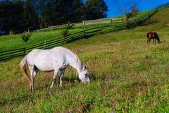 Pferd auf Ranch stockfoto