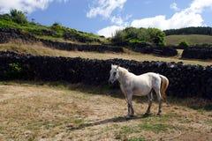 Pferd auf Weide Stockfotografie