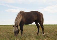 Pferd auf Weide Lizenzfreies Stockbild