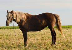 Pferd auf Weide Stockbild