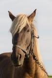 Pferd auf Weide Stockfotos