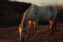 Pferd auf Weide Stockfoto