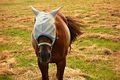 Pferd auf Weide Lizenzfreie Stockfotografie