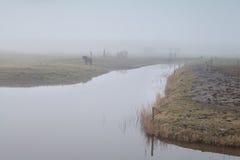 Pferd auf Weide durch Fluss im dichten Nebel Lizenzfreies Stockfoto