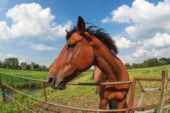 Pferd auf Weide durch Zaun Lizenzfreie Stockfotos