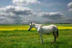 Pferd auf Wiese Stockfoto