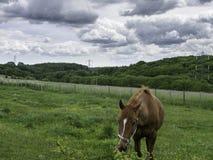 Pferd bei Bredhurst Stockfoto