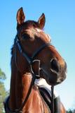 Pferd bereit zur Aktion Lizenzfreie Stockfotos