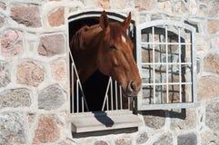 Pferd beständiges blaues Hors Lizenzfreie Stockfotografie