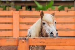 Pferd, das über einem Zaun schaut stockfoto