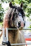 Pferd, das über Tor mit dem Haar im Gesicht schaut lizenzfreie stockbilder