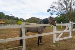 Pferd, das über Zaun schaut Lizenzfreie Stockbilder