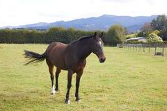 Pferd, das allein am Bauernhof steht Stockbilder