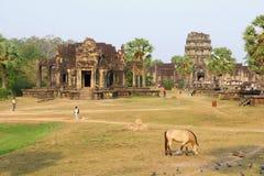 Pferd, das alten Angkor Wat Tempel, Kambodscha weiden lässt Stockfotografie