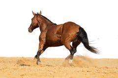 Pferd, das auf Sand auf einem weißen Hintergrund galoppiert stockfotos