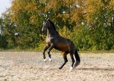 Pferd, das auf seinen zwei Fahrwerkbeinen steht Stockfoto
