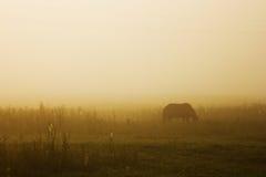 Pferd, das auf Weide bei Sonnenuntergang weiden lässt Stockbilder